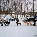 Kayal Dog Sledding