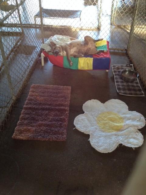 My Favorite No Kill Animal Shelter: The Oahu SPCA
