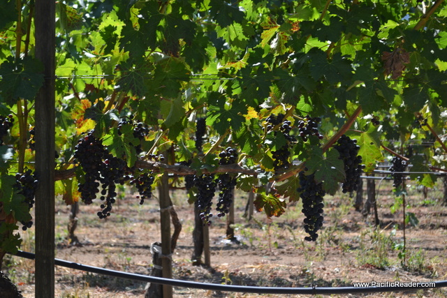 Photos from Far Niente Wine Tour September 2011
