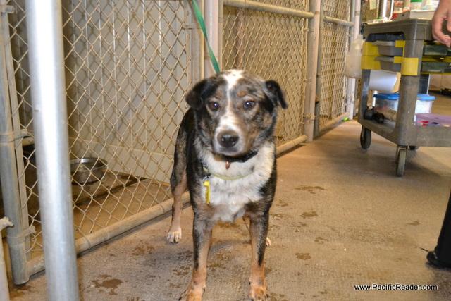 Adopt, Don't Shop: The Hawaiian Humane Society